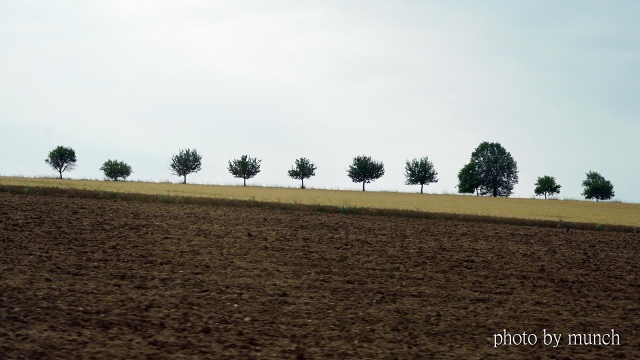 【歐洲風景明信片-山坡上的樹】